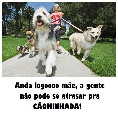 1360932134_480896285_2-Seu-Cao-Feliz-como-nunca-Dog-Walker-Sorocaba-Sorocaba