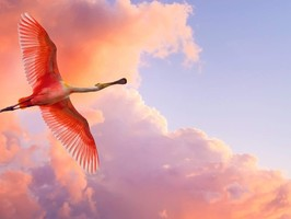 flamingo-in-flight-3080979